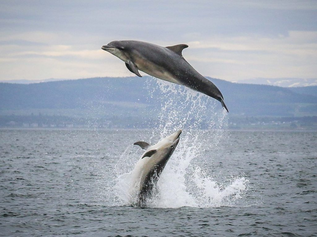 Dolphin watching with Ecoventures in the Highlands